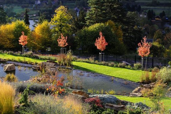 Část zahrady okolo jezírka vpodzimní náladě. Barevnost zvýrazňují vysazené exempláře javoru červeného (Acer rubrum - Red Sunset). Stromy jsou vysazeny naokraji květnaté horské louky.