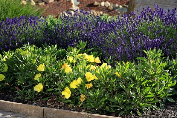 Výsadby rostlin nazahradě jsou uspořádány dotematických celků, které jsou vsouladu skompoziční zahradní skladbou. Například jednotlivé terasy se vyznačují svojí osobitou barevností – zlatá, modrá, stříbrná. Těmto barevným odstínům odpovídá také výběr druhů rostlin, například modrá terasa využívá převážnou výsadbu šanty, levandule, rozrazilů, spolu sdoplňkovými rostlinami vkontrastních barvách. Naobrázku je rozkvetlá odrůda rozrazilu vkombinaci se žlutou pupalkou.