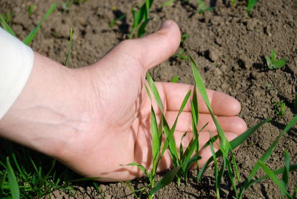 Suchá vedra, mráz, hniloba či pohyb osob během uplynulé sezony mohly natrávníku zanechat holá místa, která je nutné dosít.