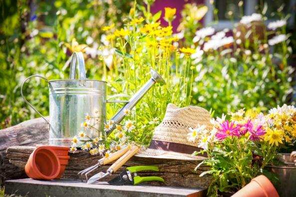 Před Servácem není léta, poServáci smrazy veta. Poledových mužích choulostivé balkonovky apřenosné okrasné rostliny, zeleninová sadba aletničky mohou zchráněných prostor ven.