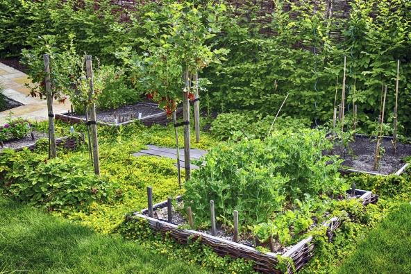 7. Jednoznačným trendem je jedlá zahrada. Stále více lidí si uvědomuje kvalitu doma vypěstovaných plodin amají chuť tento směr přenést ido soukromého života.