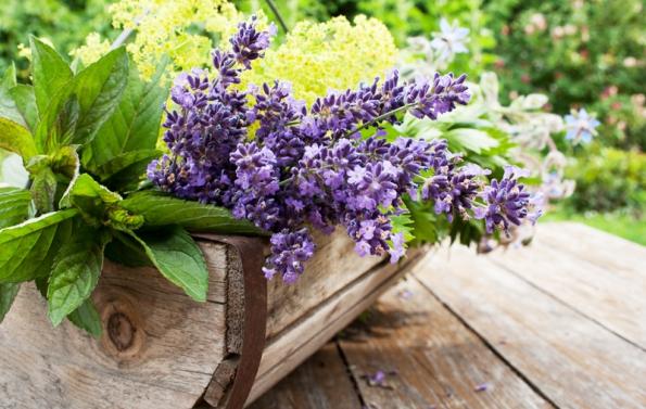 Na balkon či terasu lze doporučit i nejrůznější kombinace dalších květin, zejména kopretin, netýkavek, pomněnek, břečťanu a levandule, které přičarují prostoru romantickou atmosféru.