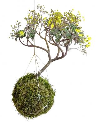 Ko-key-da-ma znamená  vjaponštině mechová koule. Jejich výrobě se věnuje floristka Lenka Hrubá (zahradananiti.cz).