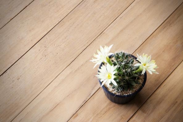 Podlaha má zásadní vliv na vzhled každého interiéru. Opticky ho dokáže zmenšit nebo zvětšit, vytvoří dokonalý kontrast i poslušně splyne. Určující přitom není pouze její odstín, ale také materiál a struktura.