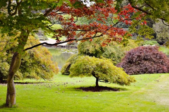 V našich zahradách hraje jednu z nejhlavnějších rolí javor dlanitolistý, na asijském kontinentu však roste celá řada druhů javorů. Jejich bohatá tvarová a barevná různorodost je fascinující.