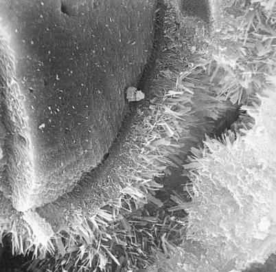 Krystalická struktura vápenopískového bloku – záruka pevnosti a stálosti (VAPIS)