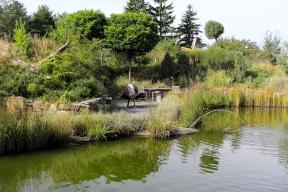Zachycování dešťové vody je čím dál důležitější, trendem jsou takzvané dešťové zahrady.