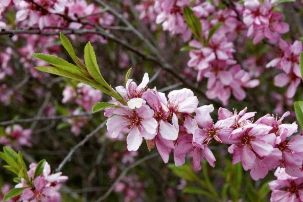 V říjnu je ideální doba na vysazování ovocných stromů (kromě meruněk a broskví) nebo keřů.