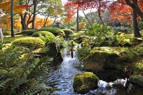 Vybarvené javory napodzim spodsadbou azalek ujezera vJuši-en, prefektura Šimane.
