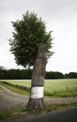 Torzo stromu ponechané jako biotop páchníka hnědého (Foto:MartinPlocek)
