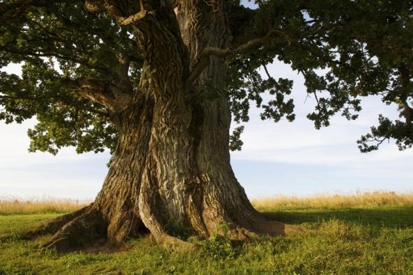 Staré stromy jsou klenoty naší krajiny izahrad, ale podobně jako senioři se bez naší péče aochrany neobejdou.