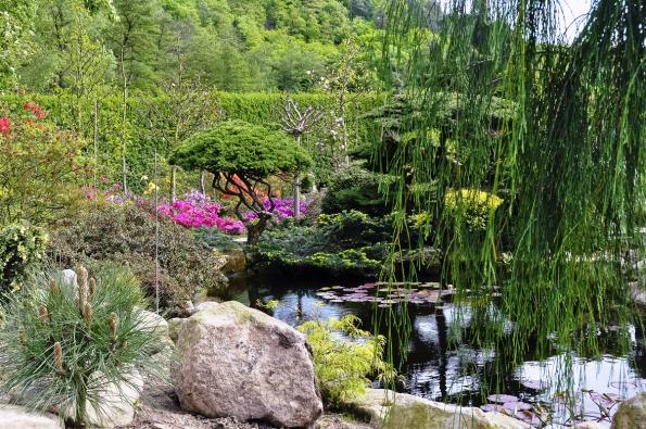 Jezírko slekníny svýhledem od zimní zahrady, nádherně nostalgické zadeště či vzimě.