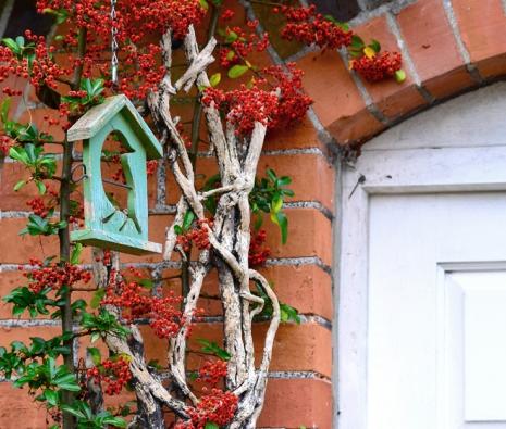 Krásnou dekorací zahrady odpodzimu dojara jsou keře spestrými ozdobnými plody.