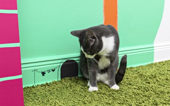 Kočka žijící vinteriéru potřebuje zabavit. Můžete jí dobytu přinést kočičí trávu neboli šantu kočičí (případně bublifuk svůní šanty kočičí), jednoduché hračky vpodobě malé myšky, cáry látek naprovázku, zmačkaný kus papíru, laserové ukazovátko nebo jí můžete nakreslit nastěnu díru, ze které myška nikdy nevyleze.