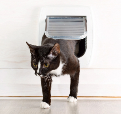 Některá dvířka nabízejí možnost otevírání pomocí magnetického klíče, který kočce upevníte naobojek, případně jí veterinář aplikuje mikročip, takže dvířky bude moci projít pouze ona.