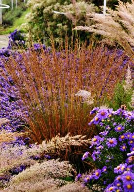 Záhony esteticky působí po celý rok. Kromě barvy květů se výrazně uplatňuje podzimní zbarvení listů a struktury rostlin, které zůstávají zachovány iběhem zimního období.