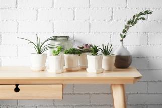 Sukulenty jsou oblíbenými pokojovými rostlinami. Nejenže se hodí do všech stylů interiéru, ale zejména jsou tak nenáročné na péči, že jejich pěstování zvládne každý.