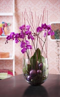 Druh Phalenopsis je nejčastěji pěstovanou orchidejí pro svou nenáročnost ačasté kvetení.