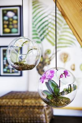 Nenáročnému druhu Phalaenopsis svědčí ivelice skromné podmínky adíky tomu jsou na mnoho způsobů použitelné jako dekorace.