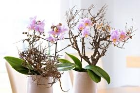 Nepřeberné množství barev aexotické tvary předurčují orchideje kpůsobivým aranžím spřírodními materiály.