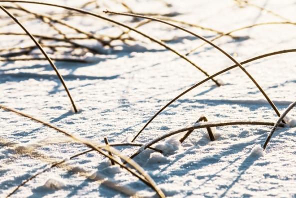 Během silných mrazů totiž není dobré vstupovat na pečlivě udržované trávníky. Zmrzlá stébla se polámou a poškodí a při častějším pohybu zatěžované místo úplně vylysá.