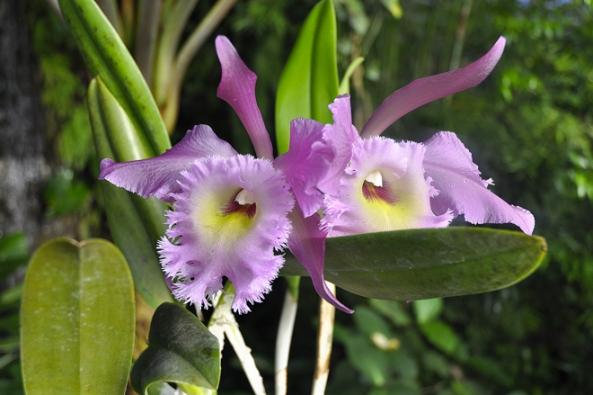 Únor a březen je obdobím hlavního kvetení orchidejí.
