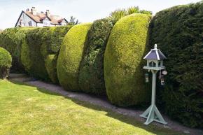 """Ivysoká zeleň zkrocená dogeometrických křivek precizním """"francouzským střihem"""" působí jemněji než plot vystavěný zcihel nebo tvárnic."""