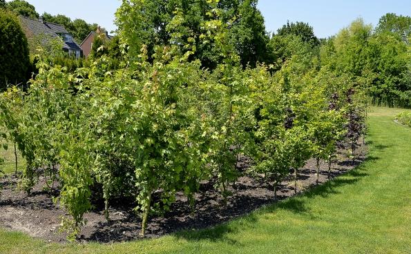 Okraj zahrady tvoří travnatá cesta aživý plot zmladých stromků, které časem splynou v hustou stěnu. Živý plot ale není celistvý adovoluje průhled dookolí.