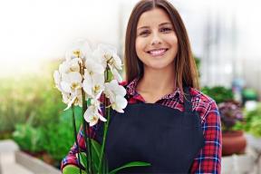 Barevné květy orchidejí už unás nejsou vzácností, prodávají je květinářství, jsou běžně vprodeji ana výstavách je možné sehnat ibotanické klenoty. Jak se vyznat vbohaté nabídce ajak na to, aby vám orchidej rostla, kvetla apřinášela radost? Poradíme vnaší třídílné poradně ve spolupráci sBotanickou zahradou vPraze.