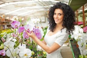 Pokud máte možnost orchidejím dopřát o pár stupňů chladnější zimování, než je běžná pokojová teplota, můžete vyzkoušet druhy, které zakládají poupata při nižších teplotách.