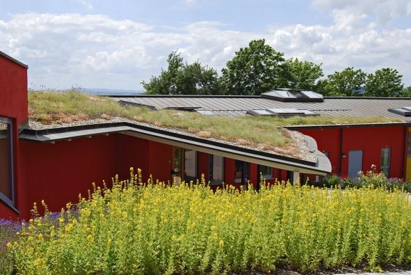 Zelené střechy prodlužují životnost střešního souvrství, tepelně izolují, snižují prašnost, zvyšují vlhkost vzduchu, přispívají kochlazování budovy, jsou trendem doby, jsou krásné... (Optigreen)