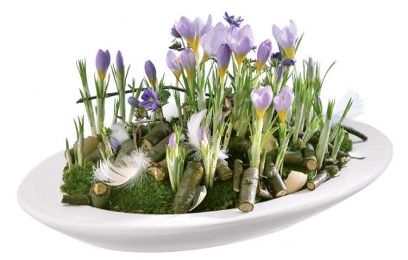 Jarní krokusy jsou blízce příbuzné spodzimním šafránem setým, jehož sušené blizny jsou vzácným kořením.