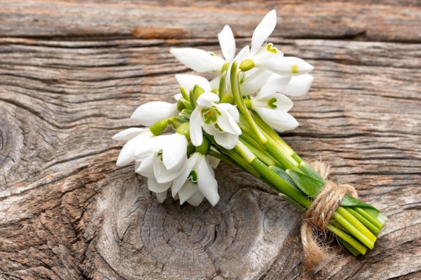 Sněženky nedočkavě vyrazí zajarním sluncem zpravidla jako první. Nevadí jim ani sněhová pokrývka. Vypadají křehce aněžně, ale jsou velmi odolné. Jejich sestry, oněco větší bledule, si chvilku počkají, ale ity brzy rozvinou sukýnky květů se žlutými tečkami nacípech.
