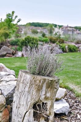 Osobitý charakter dodávají zahradě drobné netradiční prvky, jako například tymián vyrůstající z vykotlaného kmene.