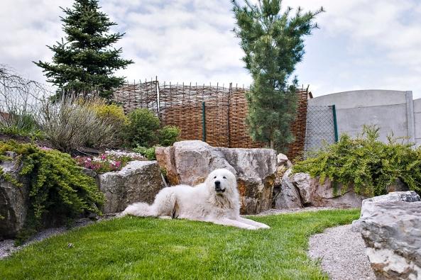 Zahradu kromě rodiny využívá  i rodinný mazlíček. Díky vyvýšeným záhonům zde vysazené rostliny nepoškodí nežádoucí psí pozornost.