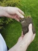Důležitá je správně dávkovaná zálivka. Pokud si nejste jisti množstvím závlahy, zkuste pro kontrolu vyrýpnout kus trávníku apodívejte se, jak hluboko se voda dostala.