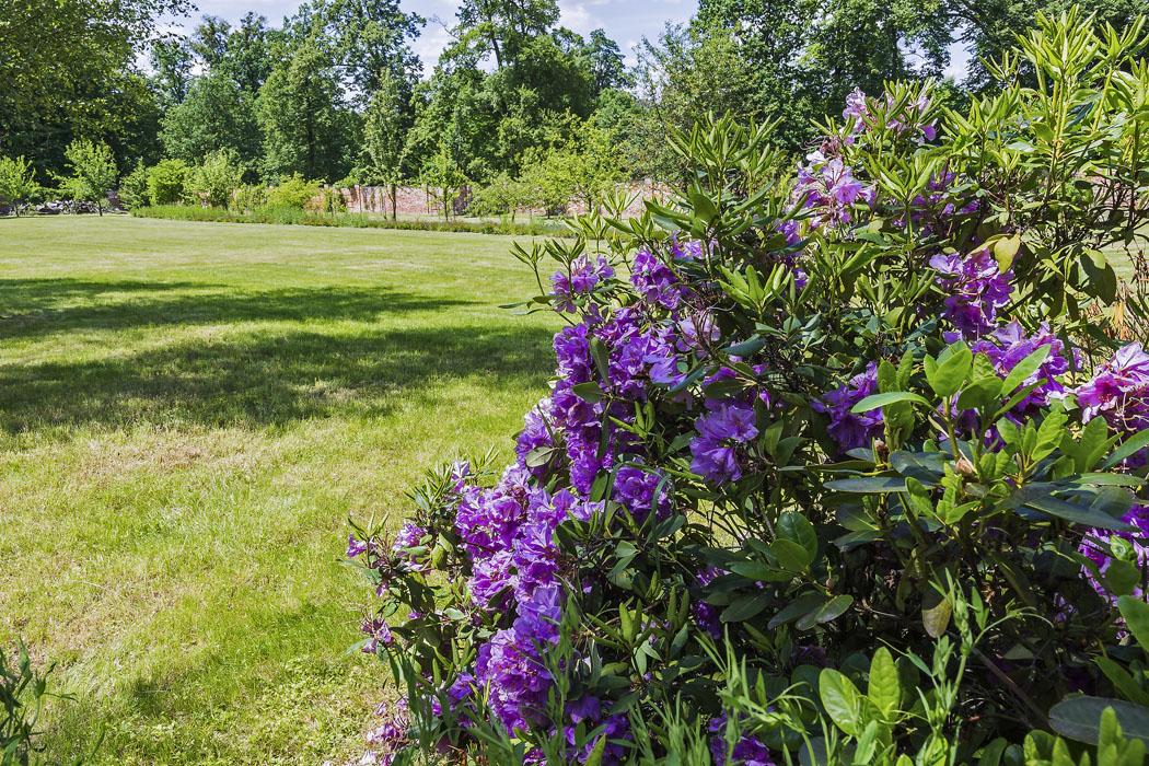 Kompozici stromové vegetace dotvářejí plošné výsadby stálezelených iopadavých keřů skombinací rododendronů ajiných okrasně kvetoucích dřevin. Důkladnou obnovou procházel také pobytový trávník, kde tráví svůj čas zejména mladí lidé. (2)