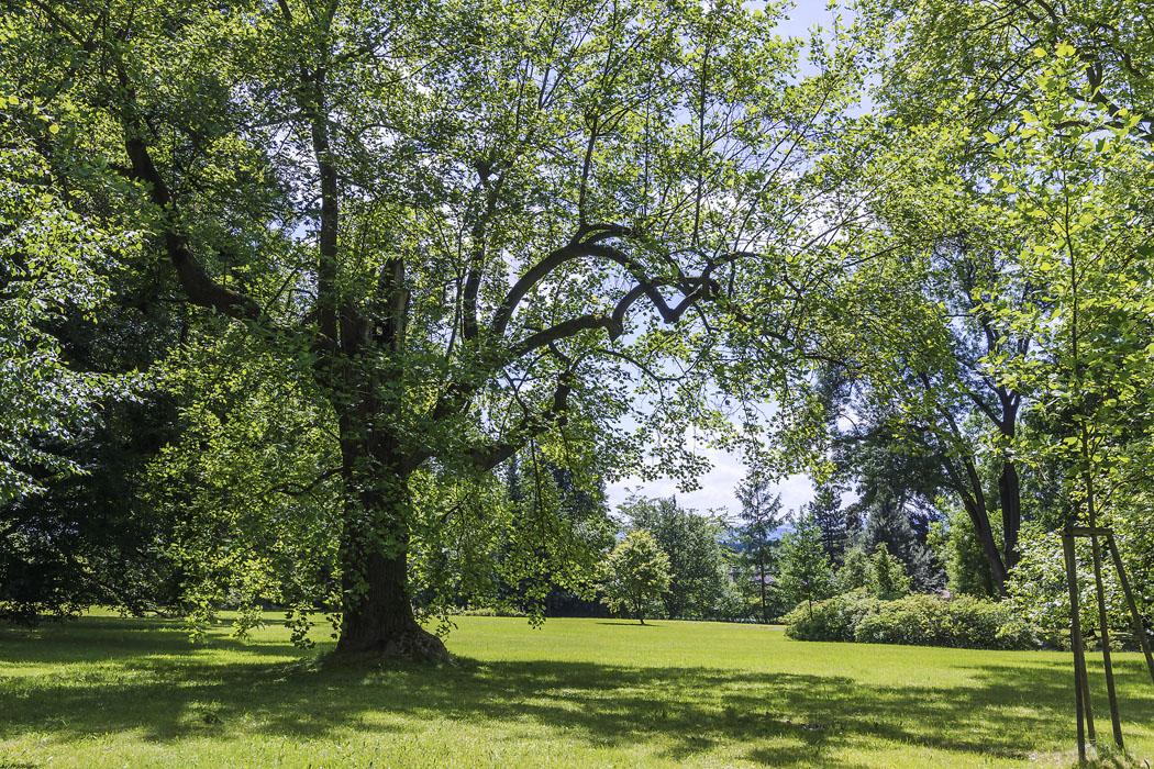 Kompozici stromové vegetace dotvářejí plošné výsadby stálezelených iopadavých keřů skombinací rododendronů ajiných okrasně kvetoucích dřevin. Důkladnou obnovou procházel také pobytový trávník, kde tráví svůj čas zejména mladí lidé. (1)