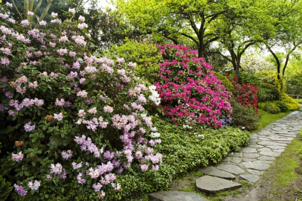 V listopadu připravte zahradu na zimu. Po hodně suchém létě a podzimu, kdy v půdě dlouhodobě chybí voda, důkladně zalijte jehličnany a stálezelené rostliny, a to nejen v nádobách, ale také v zahradě. Při nedostatku vody v půdě totiž mohou i v zimě uschnout – i v tomto období stálezelené rostliny transpirují (vypařují vodu povrchem rostlin, resp. listy). Citlivé na sucho jsou především rododendrony a vlhkomilné jehličnany. Půdu pod nimi můžete přikrýt vrstvou suchého listí nebo rašeliny, která lépe udrží vlhkost.