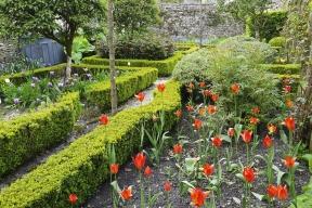 Podzim je jako stvořený pro výsadbu živých listnatých plotů. Požádali jsme oradu zkušenou zahradnici aprojektantku rodinných zahrad aveřejné zeleně Lucii Paukertovou.