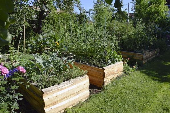 Vyvýšené zeleninové záhony umožňují poměrně pohodlnou údržbu, při které tolik nebolí záda. Majitelé zde navíc pěstují poměrně zajímavé druhy zeleniny. Jejich odrůdy tuto část zahrady ozvláštní.