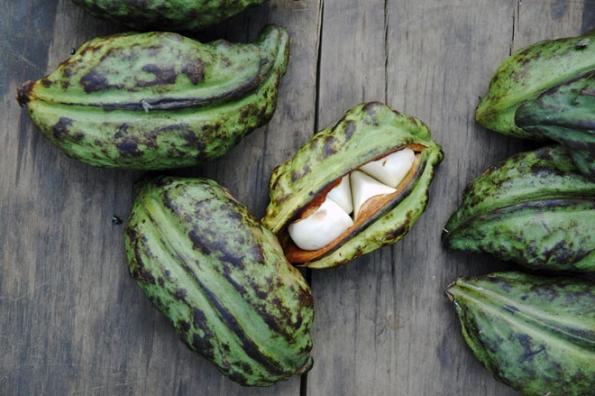 Plody asemena koly nejsou vEvropě příliš kvidění, pěstují je hlavně botanické zahrady. Jsou dost velké, celý plod má délku asi 10cm.