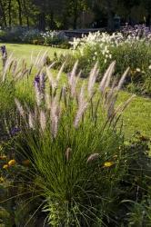 Trsy okrasných trav velmi hezky doplňují záhony trvalek iletniček, jejich vzdušná textura odlehčí celou výsadbu adodá jí přirozenější vzhled.