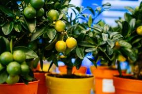 V zimní zahradě chceme mít prostředí pro chvilku spočinutí. Rostliny jsou pro tento účel ideálními společníky. Známé jsou i případy, kdy nový majitel zimní zahrady zcela propadl koníčku pěstování sukulentů či orchidejí. Vhodné a celkem nenáročné jsou i citrusy.