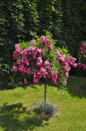 Pokud nechcete kupovat již připravené sazenice květin a zeleniny, musíte se do výsevů pustit již v březnu. Subtropickým letničkám (cínie, afrikány, petúnie) i semenáčkům teplomilné zeleniny (papriky, rajčata, lilky a další) vyhovuje pokojová teplota; důležité je zajistit co nejvíce světla přímo na okně, aby se klíčící rostlinky příliš nevytahovaly. Je třeba udržovat také stálou vlhkost a včas rostlinky rozsadit!