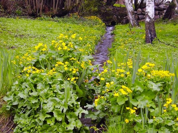 Na větších asvažitých pozemcích se doporučuje zachycovat srážkovou vodu pomocí speciálních příkopů, svejlů, které pomohou zejména vobdobí přívalových dešťů.