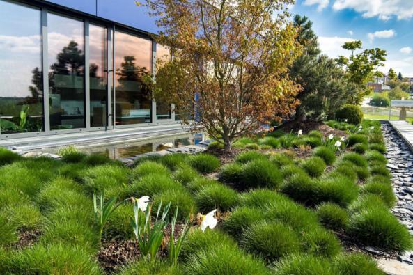Tato zelená střecha nazvaná esence japonské zahrady nemá daleko do skutečné zahrady  s květinami a stromy. Je možné ji rozdělit natři části. Plocha naseverní ajižní straně budovy je vnímána především jako obraz zvelkých prosklených prostor interiéru adoplňuje pohled nafasádu budovy při pohledu zulice. Třetí část nazápadní straně, nakterou vede přímý vstup, je pochozí terasa lemovaná pásem zeleně adoplněná ozeleň vmobilních nádobách (ESSENS Brno)