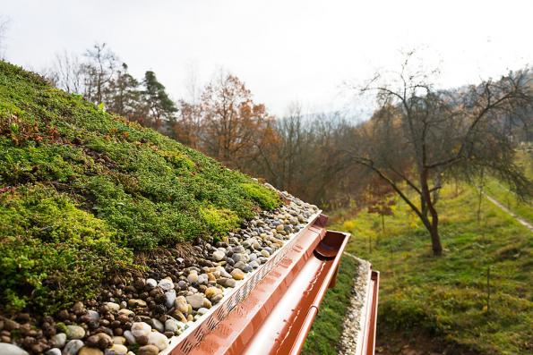 Extenzivní zeleň lze vysázet i na šikmých plochách. Působí na stavbách živě a harmonicky.