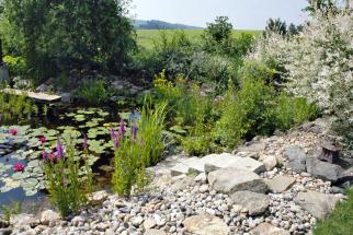 Čím jsou letní měsíce sušší ažhavější, tím víc si uvědomujeme cenu vody vesvém okolí. Přestává být něčím samozřejmým. Její hodnotu začínáme chápat, pokud je jí nedostatek, atehdy konečně přemýšlíme, jak sní šetřit ahospodárně ji využívat. Jednou zmožností je zakládání nádrží avysazování vodních avlhkomilných rostlin.