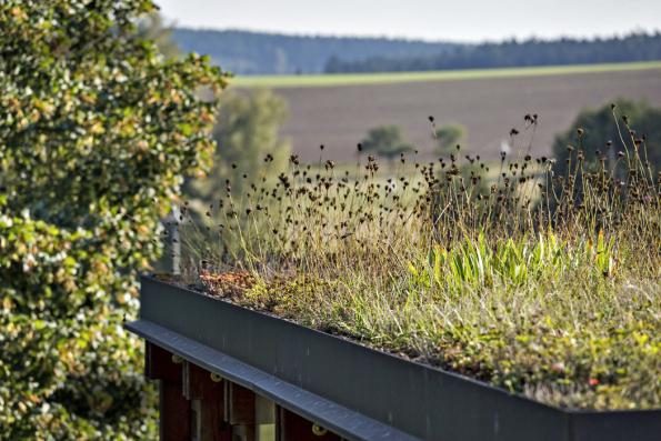 Nastřeše sklípku/dřevníku je vysazena směs suchomilných rostlin, například hvozdíků či mateřídoušek.